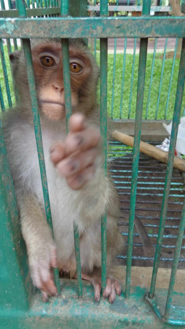 A monkey at Nelayan Restaurant.