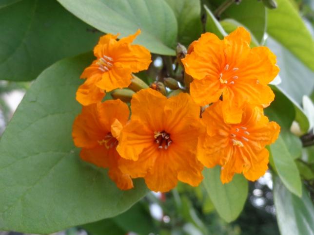 Overtly Orange